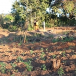 Gardens Grow Due to Water Wells